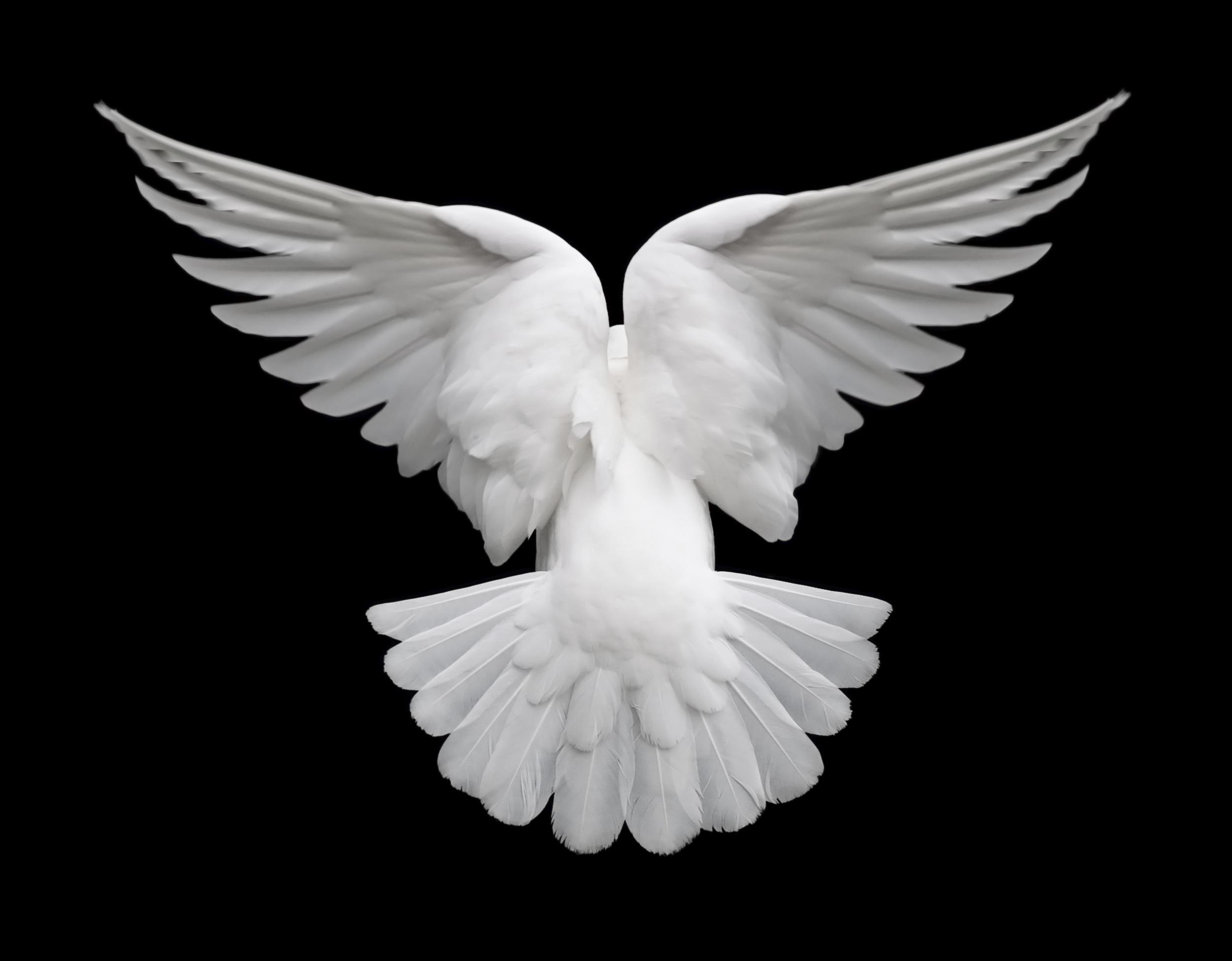 the white dove mantra fractal panda